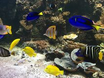 Aquarium with colorful fish. Salty aquarium with many nicel coloured fish Royalty Free Stock Images
