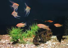 Aquarium colorful fishes in dark deep blue water with green plan stock images