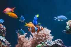 Aquarium colourfull different fishes stock photo