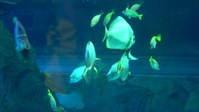 Aquarium colourfull fishes in dark deep blue water