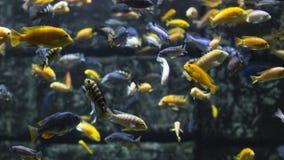 Aquarium colourfull fishes in dark deep blue water. Selective focus.