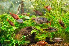 Aquarium colourfull fishes and water plants Stock Photos