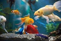 Aquarium colourfull vissen stock afbeeldingen