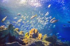 Aquarium colourfull vissen in donker diep blauw water royalty-vrije stock fotografie
