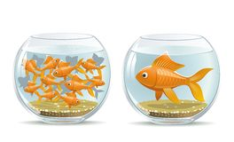 Aquarium comparison Royalty Free Stock Photography