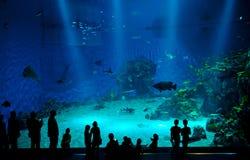 Aquarium. COPENHAGEN, DENMARK - JULY 1: Huge aquarium in Blue Planet National Aquarium Denmark on July 1, 2014 in Copenhagen Stock Photo