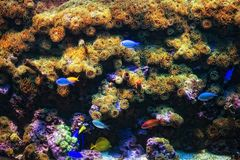 Aquarium with coral and colorful tropical fish Royalty Free Stock Image