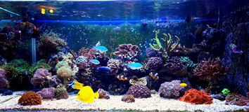 AQUARIUM. Coral reef aquarium tank at home place Royalty Free Stock Photography