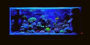 AQUARIUM. Coral reef aquarium tank at home place stock photo