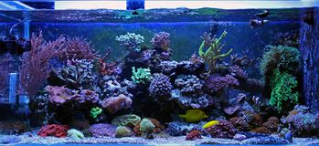 AQUARIUM. Coral reef aquarium tank at home place Royalty Free Stock Images