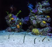 Aquarium with corals and eels. Fish protruding from sand. Aquarium with corals and eels. Fish protruding from the sand stock image