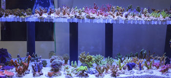 Aquarium  corals seller Royalty Free Stock Image