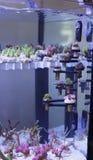 Aquarium  corals seller Stock Photos