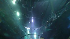 Aquarium corridor fish above heads stock footage