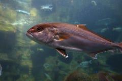 Aquarium at Crete island in Greece Stock Photos