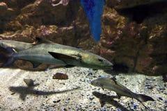 Aquarium at Crete island in Greece Royalty Free Stock Images