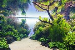 aquarium décoratif photos stock