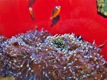 Aquarium d'ABQ BioPark au Nouveau Mexique photo stock