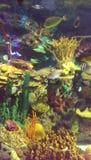 Aquarium d'eau salée Photo stock