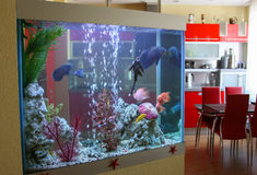 Aquarium dans la maison Photo libre de droits