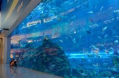 Aquarium dans le mail de Dubaï, Dubaï, Emirats Arabes Unis Photo stock