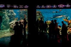 Aquarium dans Temaiken Photos libres de droits