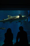 Aquarium date with shark. Couple on a date in aquarium admires view of a shark swimming by Stock Images