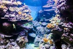 Aquarium de Barcelone - l'Espagne Photos stock