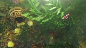 Aquarium de clip vidéo tiré d'en haut à l'aide d'un téléphone avec l'eau fermentée, des algues, une cruche, des coquilles et des  banque de vidéos
