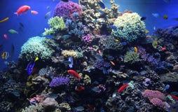 Aquarium de compartiment de monterey de réservoir de récif Images stock