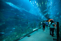 Aquarium de Dubaï Photo libre de droits
