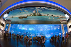 Aquarium de Dubaï Image stock