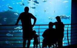 Aquarium de famille photographie stock libre de droits