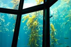 Aquarium de forêt de varech Images libres de droits