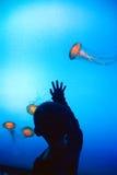 Aquarium de la Géorgie Photos stock