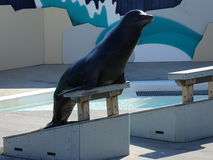 Aquarium 14 de Lion Show At The New York de mer Image stock