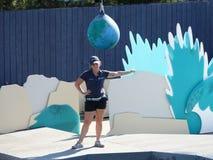 Aquarium 12 de Lion Show At The New York de mer images stock