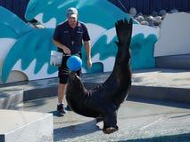 Aquarium 9 de Lion Show At The New York de mer images stock