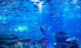 Aquarium de mail de Dubaï Photos stock