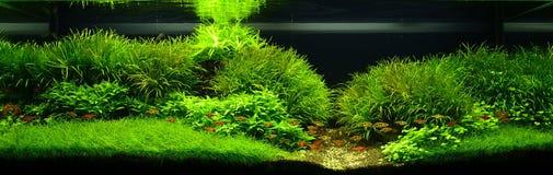 Aquarium de nature Photo libre de droits