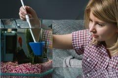 Aquarium de nettoyage de jeune femme avec de bêtas poissons à la maison photo libre de droits