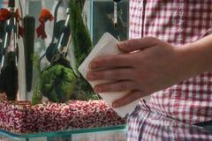 Aquarium de nettoyage de jeune femme avec de bêtas poissons à la maison photos libres de droits
