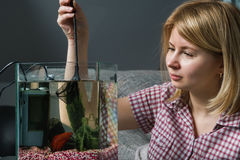 Aquarium de nettoyage de jeune femme avec de bêtas poissons à la maison image libre de droits