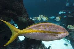Aquarium de New York Images stock