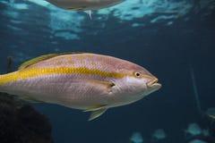 Aquarium de New York Image stock