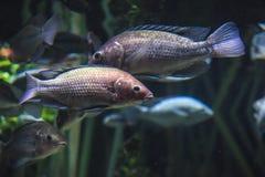 Aquarium de New York Images libres de droits