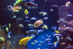 Aquarium de New York Photographie stock
