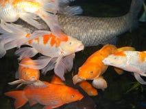 Aquarium de poissons à Changhaï Images libres de droits