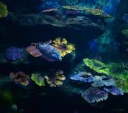 Aquarium de poissons Image stock
