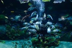 Aquarium de poissons Photos stock